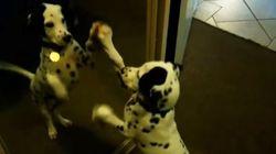 ASSISTA: As ÓTIMAS reações de 'catioros' filhotes diante do espelho pela 1ª