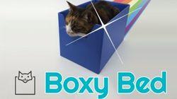 Startup especializada em produzir caixas para gatos lança campanha no