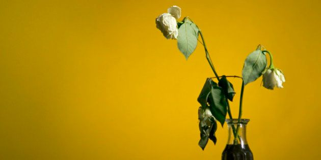 Vase of dead