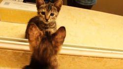 ASSISTA: 'Gatíneos' têm reações fofíssimas ao se verem no espelho pela 1ª