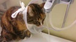 Este gatinho genial encontrou uma nova utilidade para o 'cone da