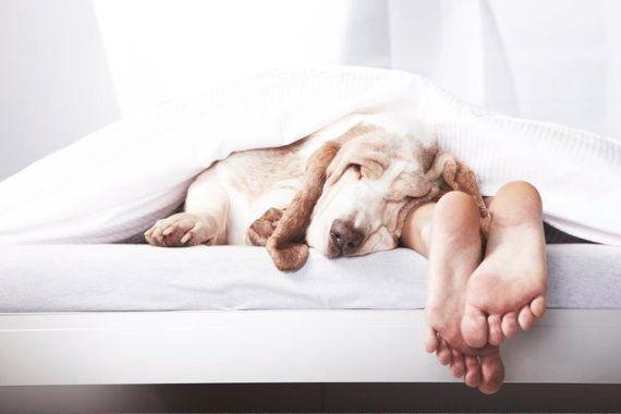 Os dez mandamentos para uma noite de sono