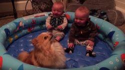 ASSISTA: Lulu da Pomerânia pula e bebês gêmeos caem na