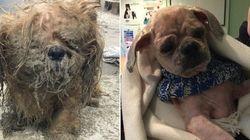 Veja o antes e depois destes cachorros resgatados do