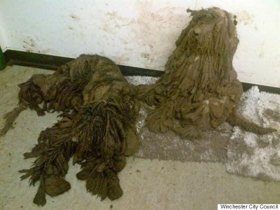 Veja o antes e depois destes cachorros resgatados do abandono