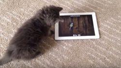 ASSISTA: Gatinho tenta pegar rato em