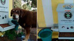 Na Colômbia, animais abandonados têm ração e água de