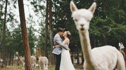 17 fotos de casamento tiradas na 'Hora H' que vão fazer você morrer de