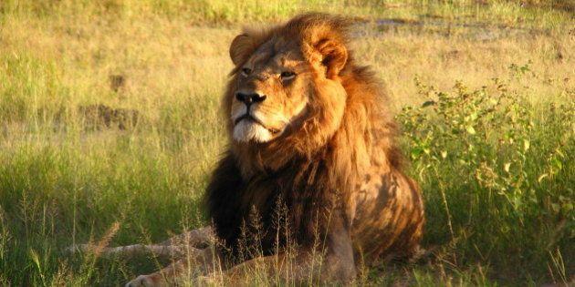 Hwange National Park, Zimbabwe 2010R.I.P. Cecil