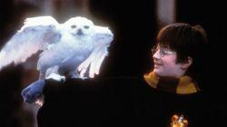 FOTOS: Como estão os atores da série 'Harry Potter'