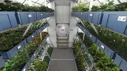 Astronautas vão comer 1ª comida cultivada no espaço nesta segunda