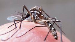 Vírus Zika representa ameaça para a saúde humana, diz instituto