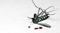 Quem disse que o mosquito não sente? Você já perguntou pra