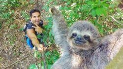 Bicho-preguiça fotogênico rouba cena nesta selfie (uma das melhores do