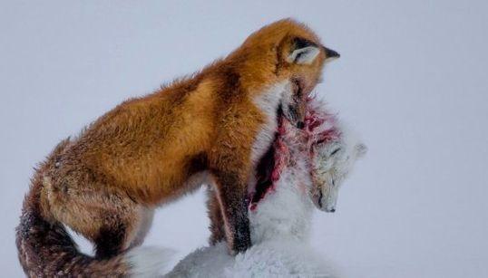 Wildlife Photographer of the Year 2015: Veja as melhores fotos da