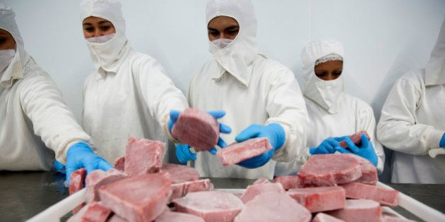 Workers select and clean frozen tuna steaks before packaging at the Grupo Pinsa SA processing plant in...