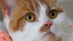Como os gatos sobrevivem a quedas