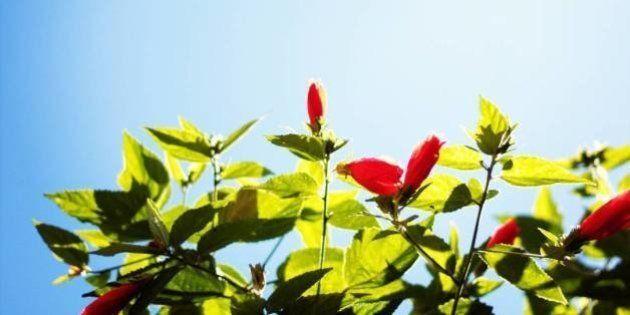 Cultivar um jardim pode salvar a sua vida, diz