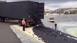ASSISTA: Milhões de bolas pretas estão sendo despejadas em reservatório dos