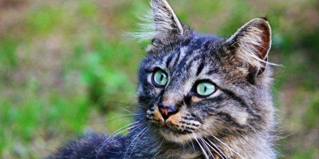 Austrália defende extermínio de gatos após críticas de Brigitte