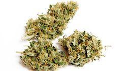 Em documento à ONU, 1.000 líderes globais afirmam que guerra às drogas é um