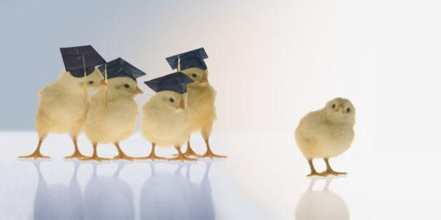 Chicks wearing graduation