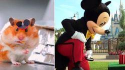 ASSISTA: Hamster se diverte ~loucamente~ em rolê na