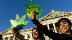 'Com a descriminalização, o usuário deixará de ser estigmatizado', defende Pierpaolo