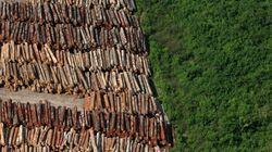 Desmatamento na Amazônia diminuiu 82% na última