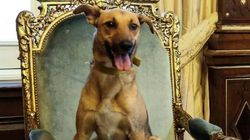 Macri publica foto de seu cachorro na cadeira presidencial da Argentina