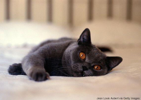 Por que os gatos têm pupilas verticais? E por que elas mudam tanto de