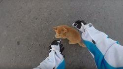 ASSISTA: Mulher para moto para salvar gatinho em