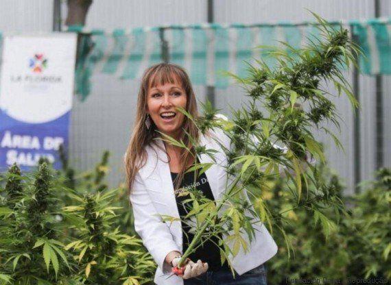Com 6,9 mil plantas, Chile já pode se orgulhar pela maior plantação da maconha medicinal da América