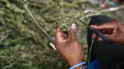 É hora de dar fim a guerra às drogas e concentrar esforços em políticas