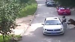 Mulher sai do carro para socorrer vítima de tigre e é morta por