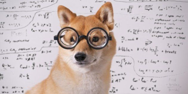 Professor dog with spectacle