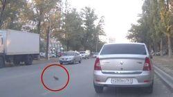 ASSISTA: Pomba 'causa' triplo acidente carro na