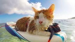 ASSISTA: Kuli, o gato surfista de um olho só, se diverte nas férias mais que