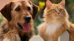 Os gatos são melhores que os cachorros do ponto de vista evolutivo, diz