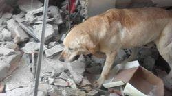 Cão de resgate morre após salvar vítimas de terremoto no