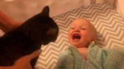 ASSISTA: Bebê fica doidinho ao ver gato pela primeira