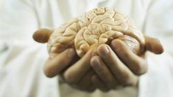 Cientistas dizem ter criado cérebro humano em