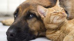 USP sedia seminário sobre proteção animal neste