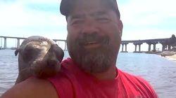 ASSISTA: Foca simpática pula em barco e faz amizade com