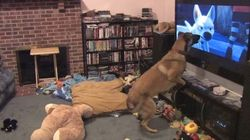 Cachorro tem reação incrível toda vez que assiste ao filme 'Bolt -