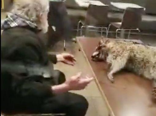 man brings raccoon carcass into mcdonalds