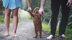 Casal faz ensaio com cãozinho para fugir da pressão por