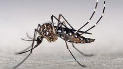 Com 1,4 milhão de casos em todo o Brasil, dengue bate recorde em