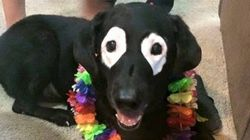 Cachorro com vitiligo se torna celebridade por causa de manchinhas