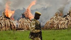 Decisão Radical: Contra comércio ilegal, presidente do Quênia destrói TONELADAS de